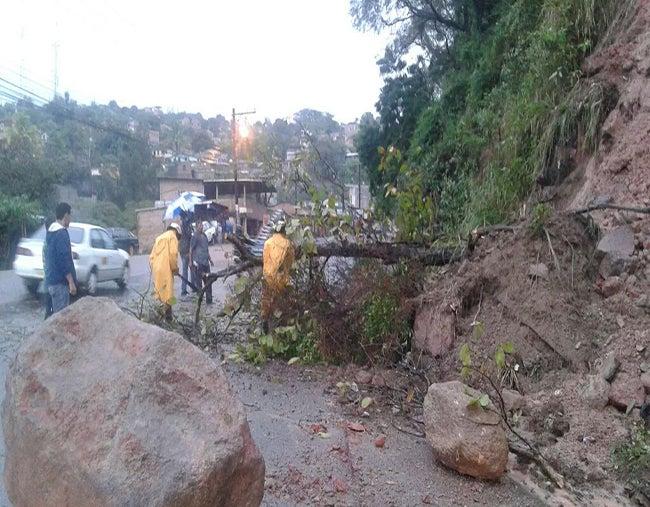 También se reportó ayer la caída de árboles en carreteras.