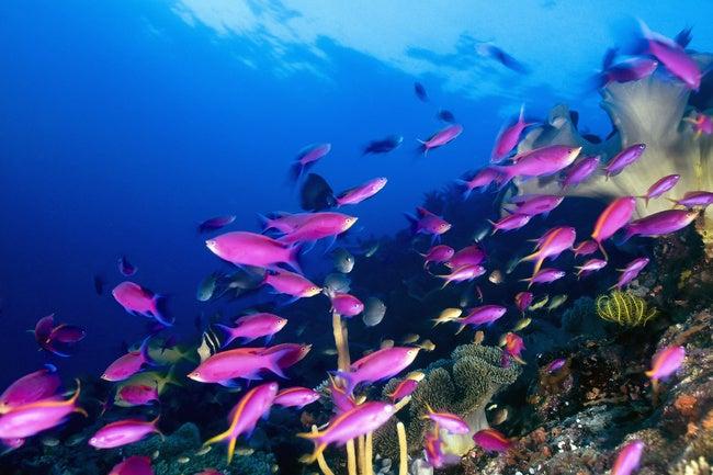 Las poblaciones de animales marinos (mamíferos, aves, reptiles y peces) se han reducido a la mitad desde los años 1970.