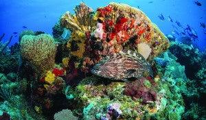Arrecife Mesoamericano, en Islas de la Bahía